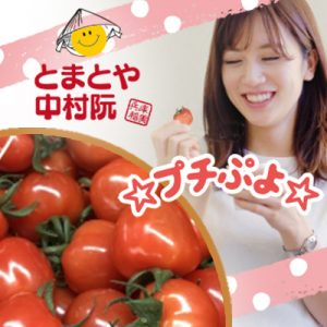さくらんぼのようなかわいい ミニトマト☆プチぷよ☆