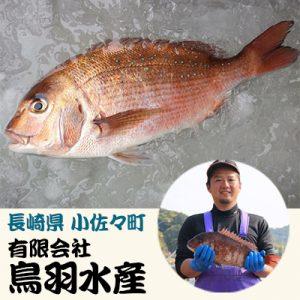 色よく、味よく、健康育ち!活〆真鯛