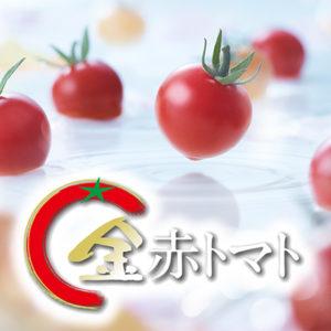 トマト好きが、恋をする「金赤トマト」